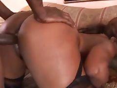 Ebony Star Cinnabunz Black Big Boob