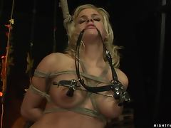 Bondage, Ass, BDSM, Bondage, Tight, Tied Up