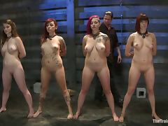 Four kinky bitches lick each others pussies and suck a cock
