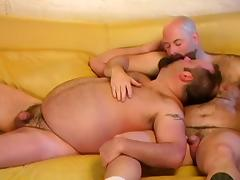 chub bears on sofa tube porn video